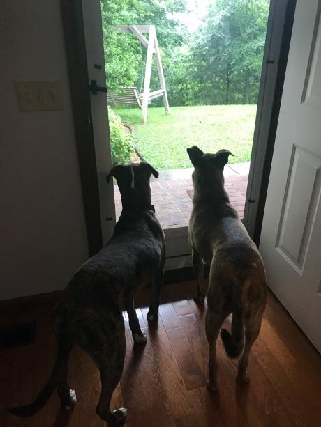 babies at the door